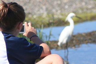 watching bird life