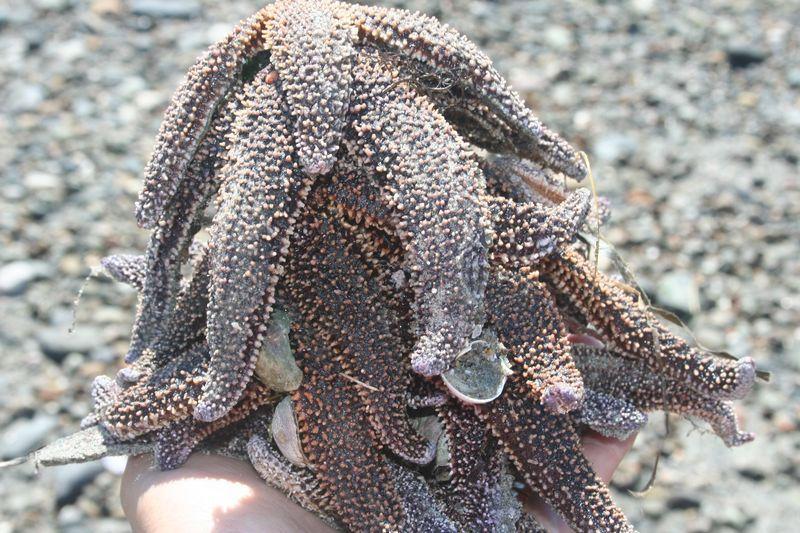 Saving starfish