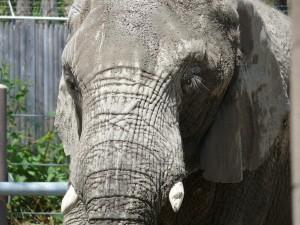 anti-aging-elephant-skin